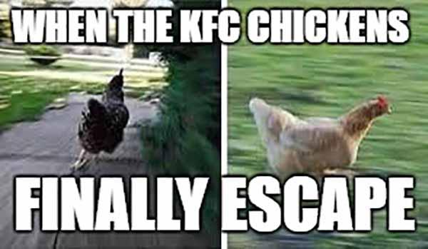 chicken running meme
