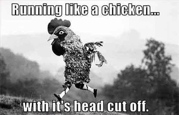 chicken running memes