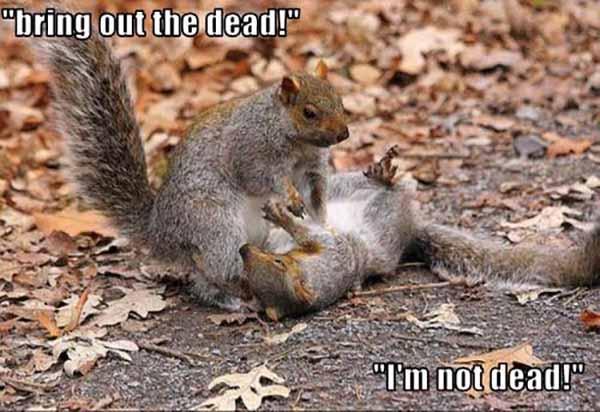 dead squirrel meme