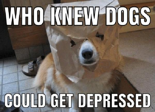 depression dog meme