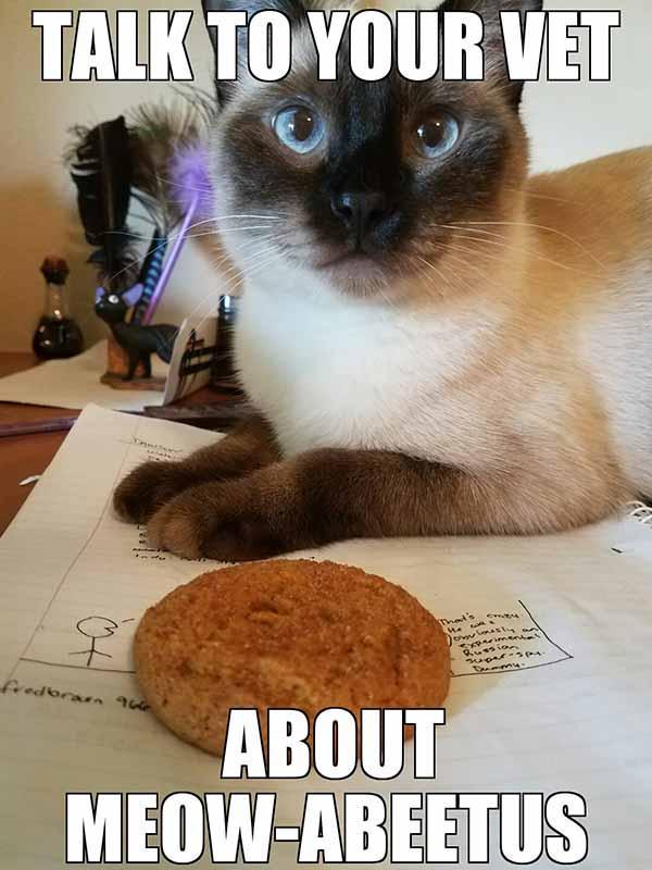 diabetes cat meme