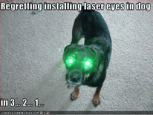 dog laser eyes meme