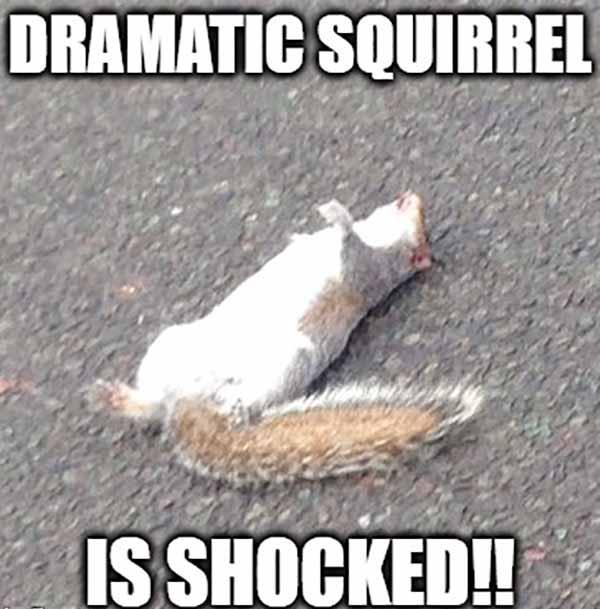 dramatic squirrel meme
