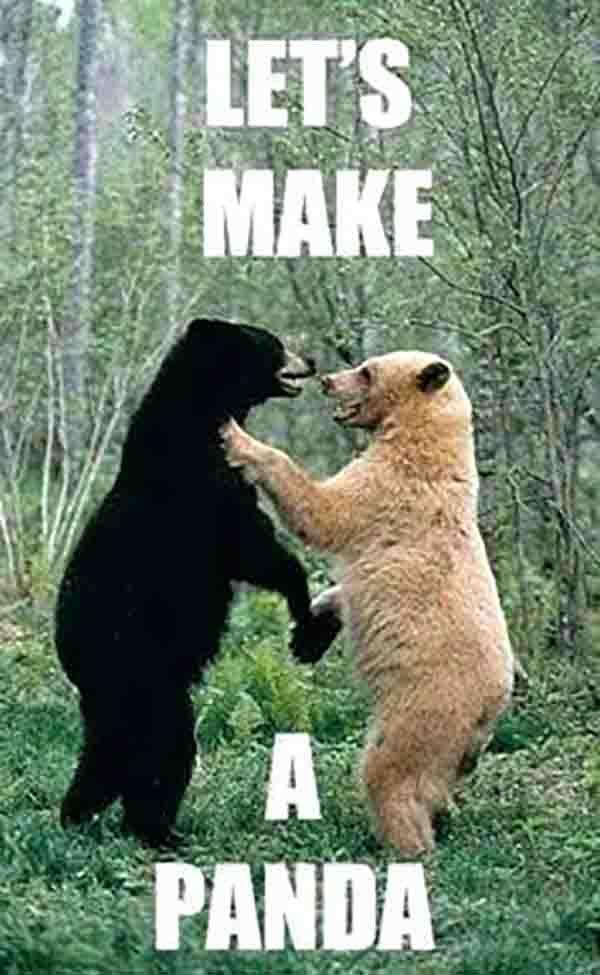 funny bear meme - let's make a panda
