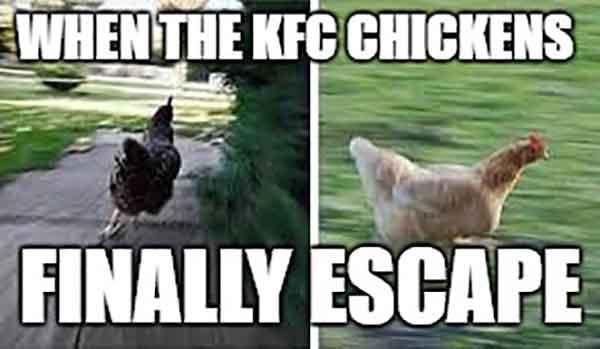 funny chicken running meme