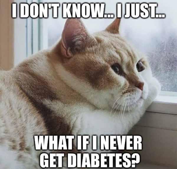 funny diabetes cat meme