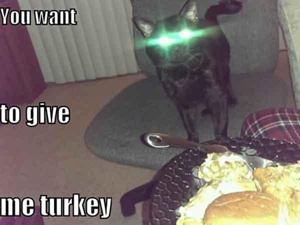 funny laser eyes cat meme
