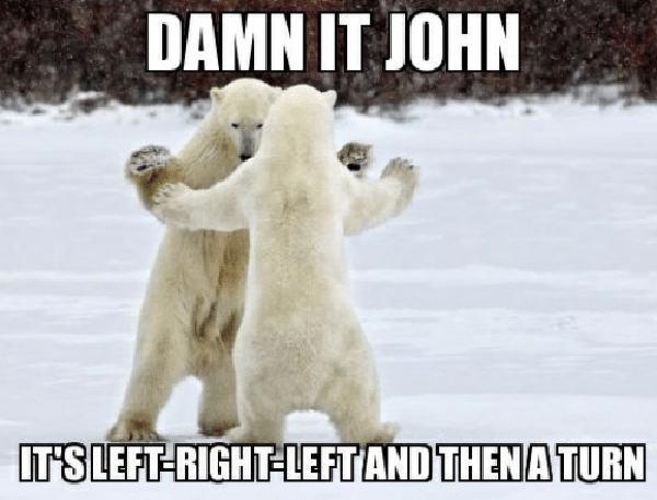 funny polar bear meme