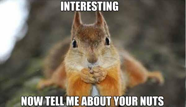 funny squirrel nuts meme