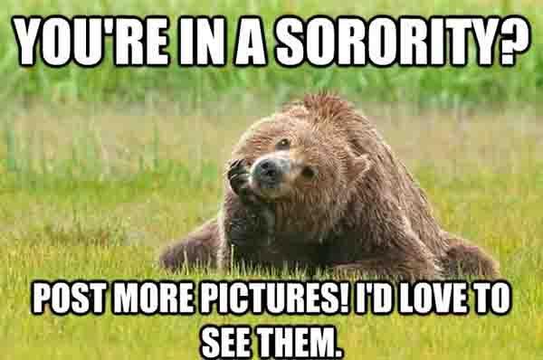 grizzly bear meme