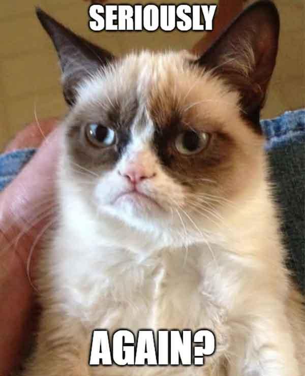 grumpy cat seriously again meme
