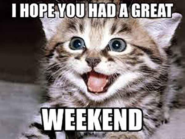 have a great weekend cat meme