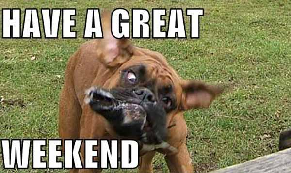 have a great weekend dog meme
