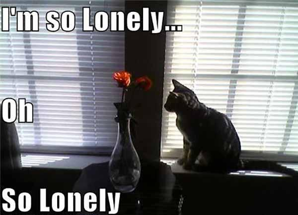 i'm lonely oh so lonely
