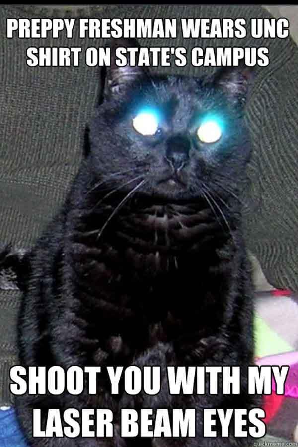 laser eyes cat meme