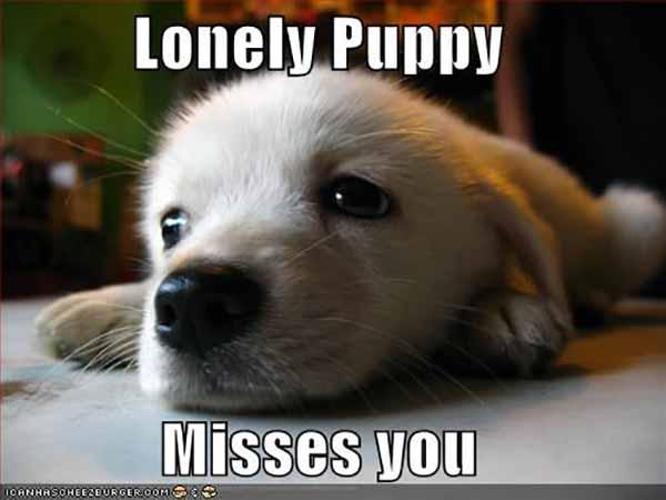 lonely puppy meme