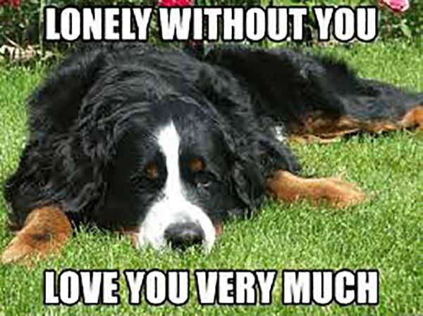lonely without you meme