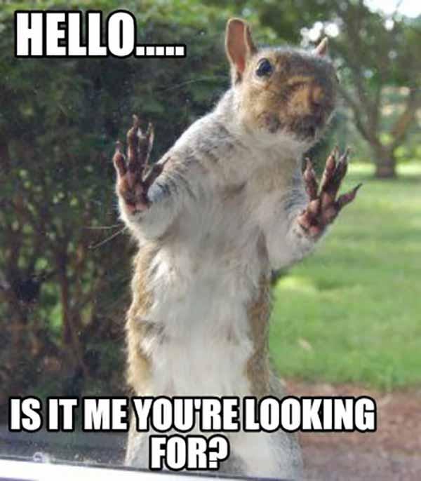 look squirrel meme