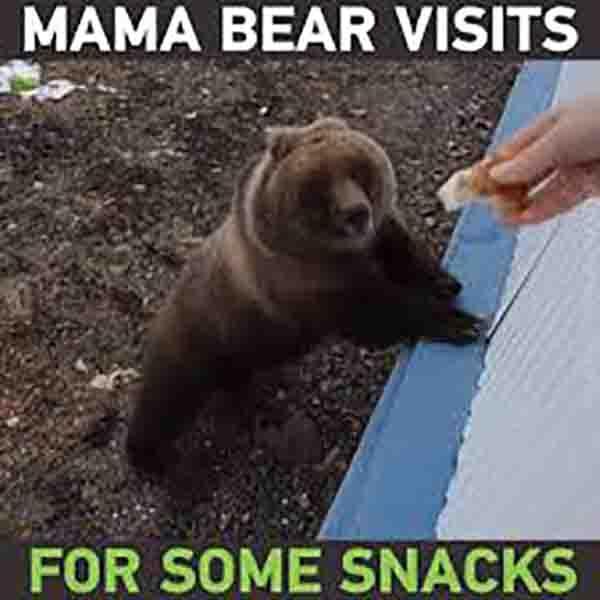 mam bear visits for some snacks