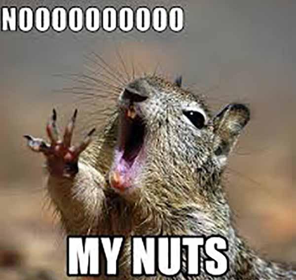nooooo my nuts - a squirrel misses his nuts