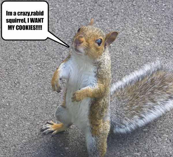 rabid squirrel meme