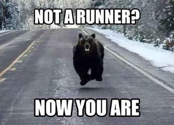 running bear meme