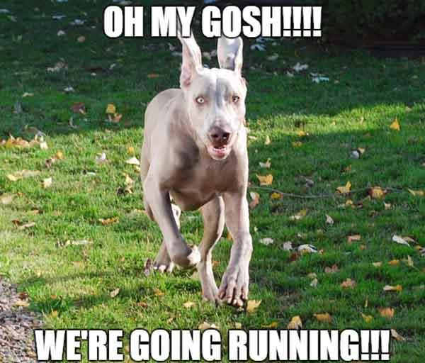 running dog meme