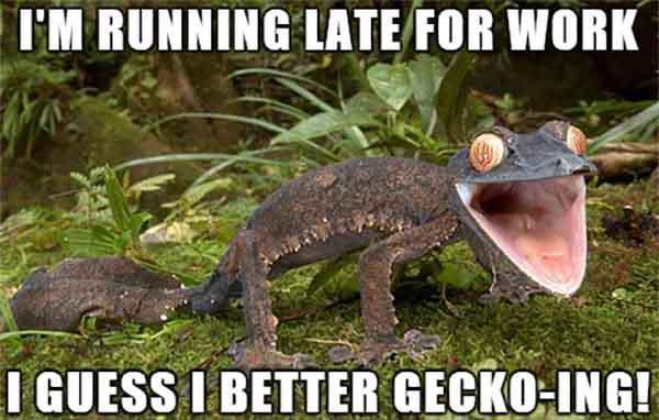 running lizard meme