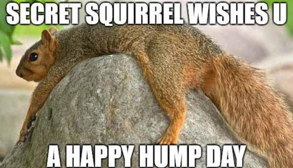 secret squirrel meme
