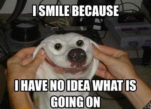 smile dog meme