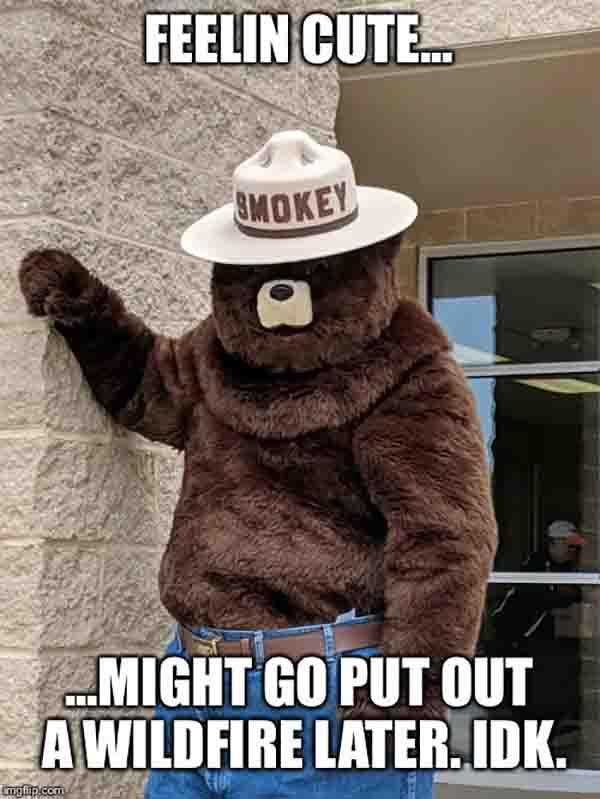 smokey the bear memes