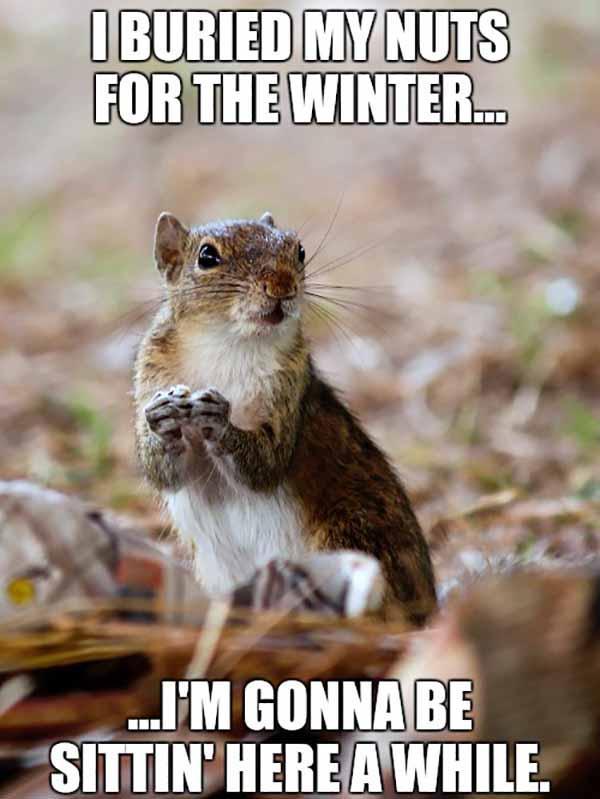 squirrel balls meme