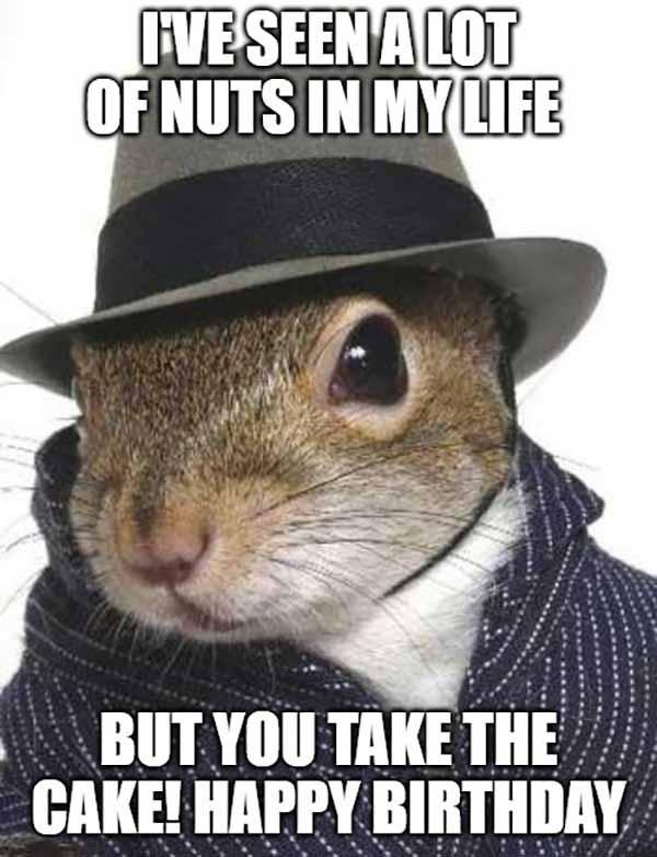 squirrel birthday meme
