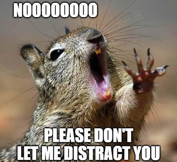 squirrel distraction meme