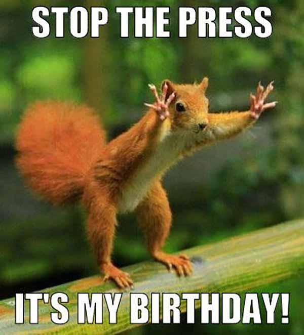 stop the press it's my birthday - squirrel birthday meme