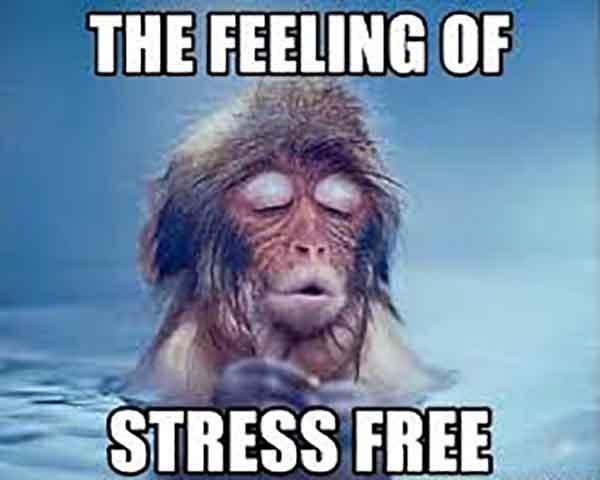 stress free meme