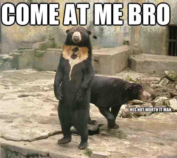 sun bear meme