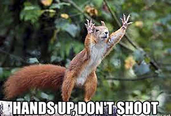 up squirrel meme