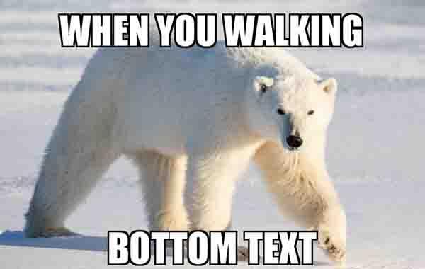walking polar bear meme