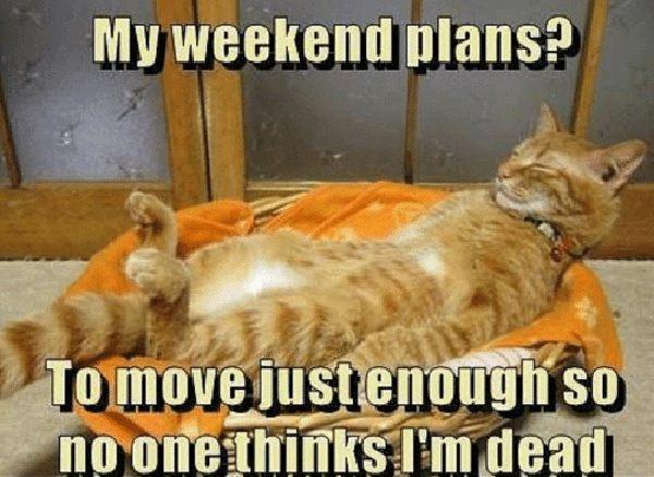 weekend plans meme