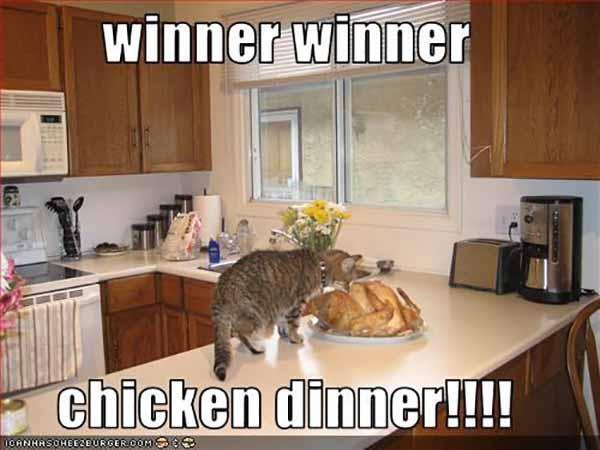 winner winner chicken dinner cat meme
