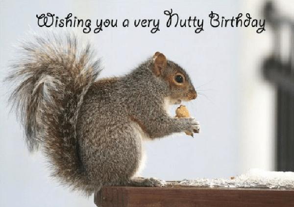 wishing-you-a-very-nutty-birthday