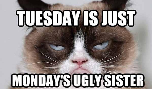 funny happy tuesday meme