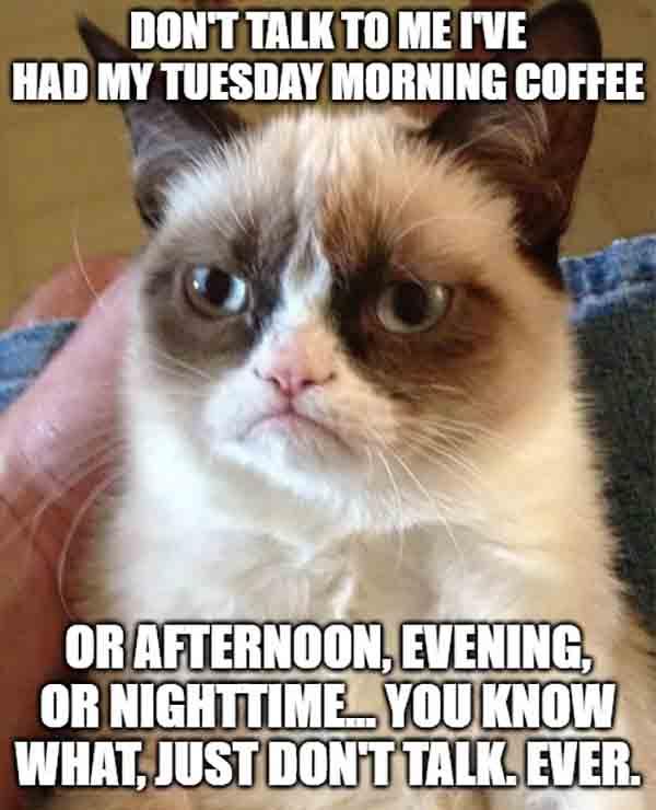 grumpy cat coffee tuesday meme