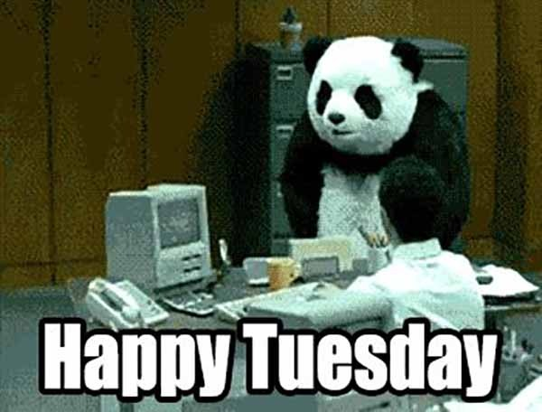 happy tuesday funny meme