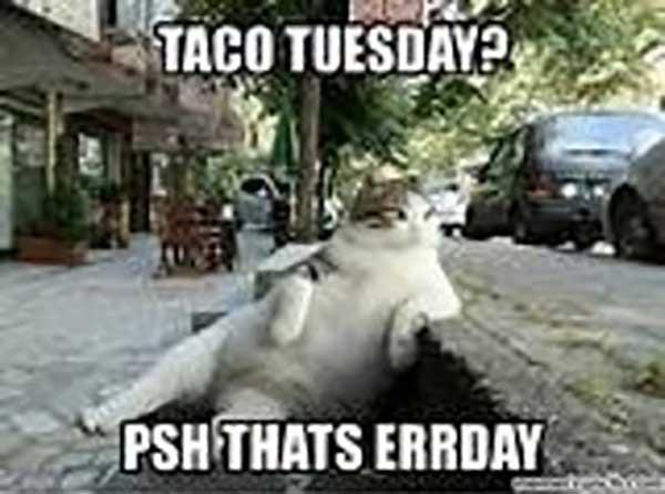 taco tuesday meme errday