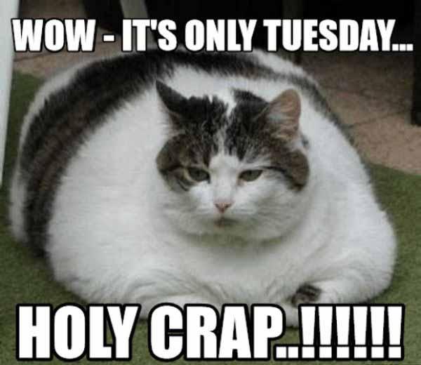 tuesday cat meme